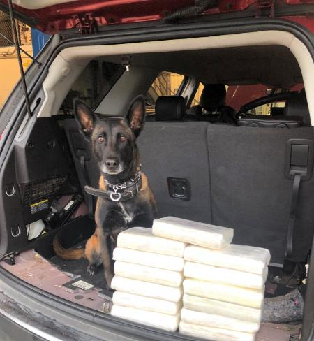 FBCSO K-9 Sniffs Out 14 Kilos Of Cocaine During Traffic Stop